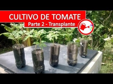 Cultivo de tomate parte 2 como plantar tomates for Jardines espectaculares