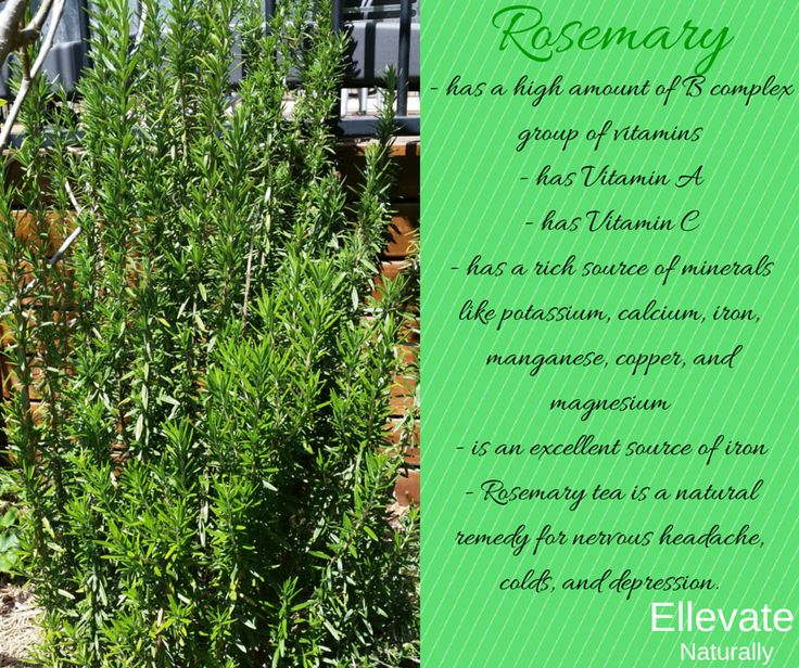 benefits of Rosemary https://www.facebook.com/ellevatenaturally/photos/a.512672888762584.128986.512666322096574/938155932880942/?type=1&theater