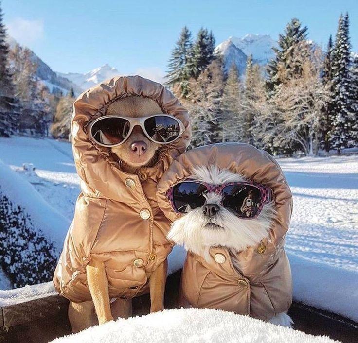 нам №морозы нипочем :) #собаки #зима #горы #снег #зима #выходные #dogs #настроение #мороз #galleria_arben #морозы
