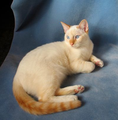 Once upon a time there was a cat who looked like this. He was stuck all alone at the pound and one day a girl named Melissa came and found him and took him home. And they lived happily ever after :)