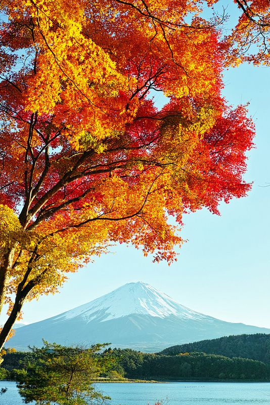 Mt. Fuji and autumn leaves / Fujikawaguchiko, Yamanashi, Japan