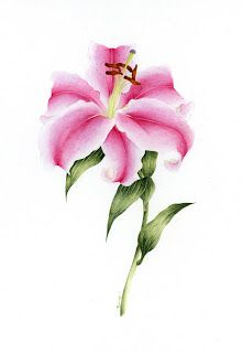 april blossom: pink stargazer Lily, watercolor