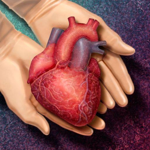 Vida y Salud » ¿Es usted donante de órganos? Experto de Mayo Clinic aclara cinco mitos sobre la donación de órganos