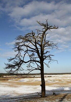 Karin Gottlieb fotografie: Loonse en Drunense duinen