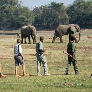 South Luangwa Walking Safari with Bushcamp Co