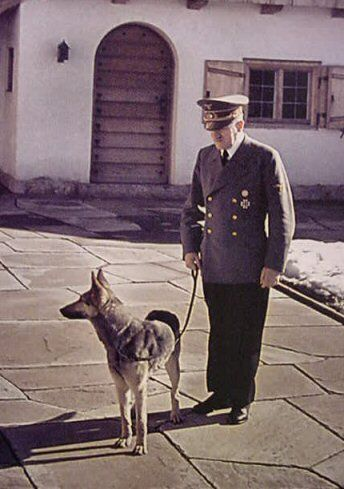 Führer Adolf Hitler and his trusty German Shepherd companion Blondi enjoy an afternoon outside at Hitler's personal mountain retreat the Berghof. Blondi had to be put down in 1945 as so she wouldn't be paraded around as a trophy by the Bolshevik Red Army, infamous for their inhumane cruelty.