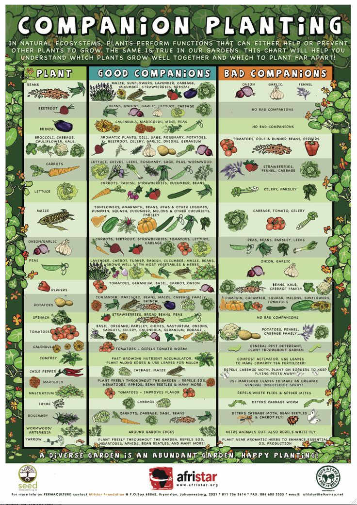 Companion Planting Poster - Good info at the bottom on flowers and herbs that benefit food plants.