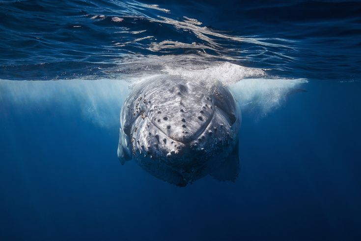 Fascinating Journey in the Blue World with Whales – Fubiz Media