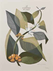 The Coffee Plant (Branch) - Open Edition, 12x16 print by Chris Turnham for Milstead & Co. | $30