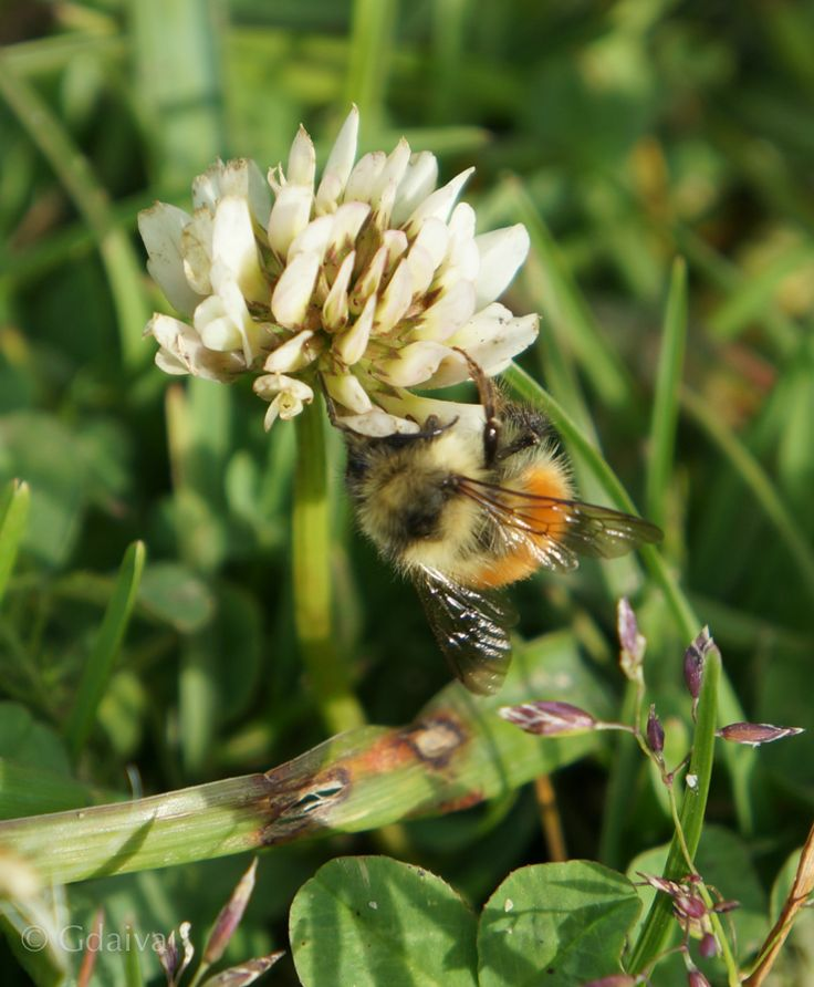 We have many bumble bees, it means our backyard is pristine. Visit us to experience sustainable living and gourmet adventure