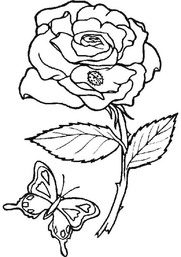 coloriage de la fleur et du papillon