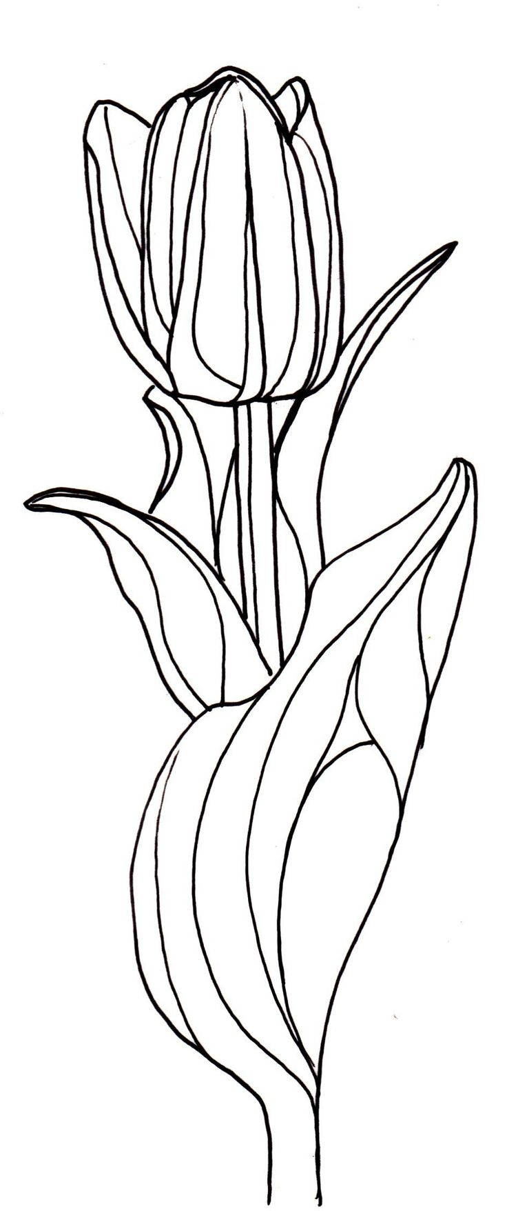 line drawing - flowers...