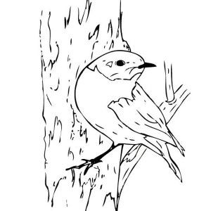 Robin Blue Bird Coloring Page
