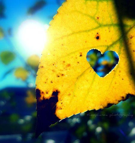 LOVE this idea!!!!: Photography Lovin, Heart, Art Photography, Autumn Fall, Heart Cutout, Heart To Heart, Heart Late, Brows Photography, Autumn Splendor