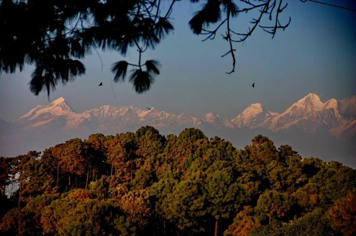 Гималаи сквозь непальские сосны / Himalayas in Nepal #nepal