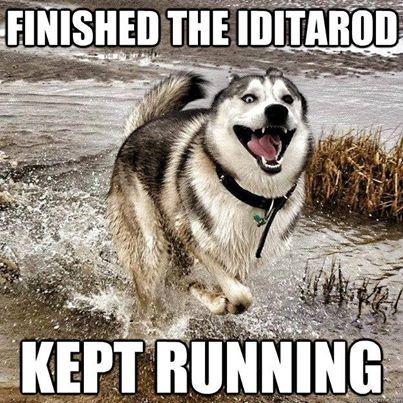 Iditarod runner