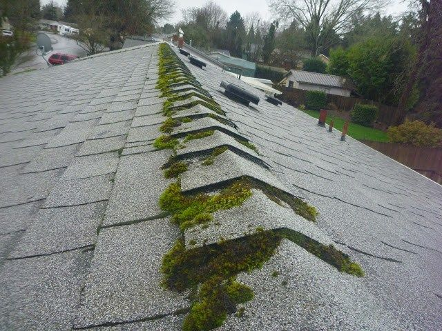 Composition Roof Maintenance