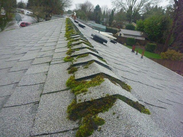 Composition Roof Maintenance