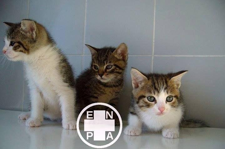 In occasione della Giornata del Gatto 2014 vi ricordiamo che diamo il nostro contributo agli amici a 4 zampe sostenendo dal 2013 l'ENPA - Ente Nazionale Protezione Animali.