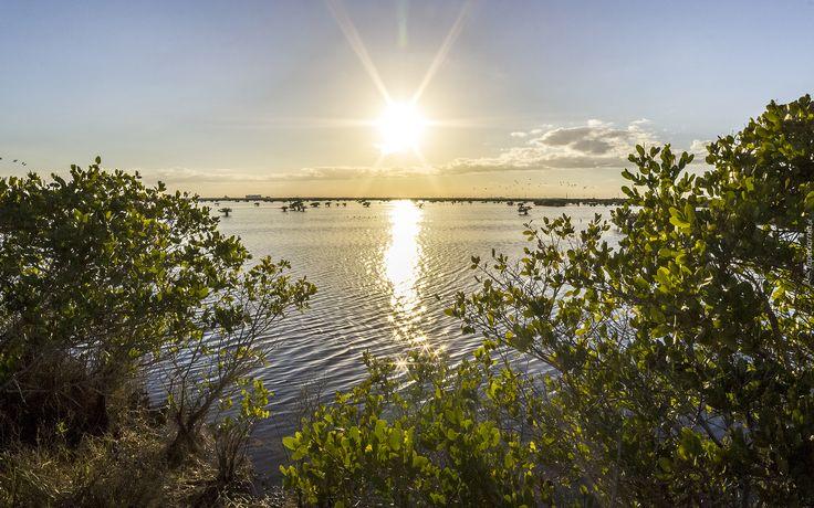 Jezioro, Wschód słońca, Krzewy