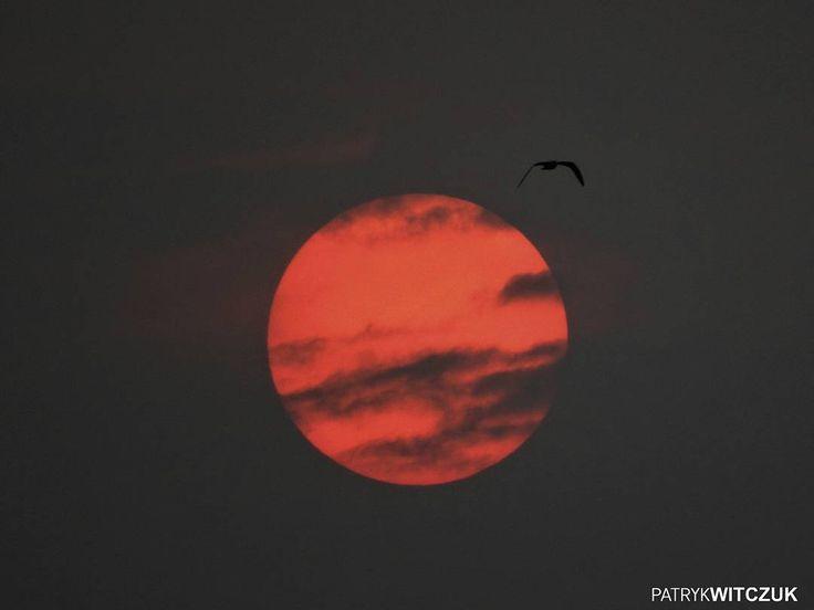 #Szczecinek dziś. Nic dodać nic ująć  #fotografia #sztuka #słońce #niebo #ptak #art #photooftheday #jesień #zdjęcie
