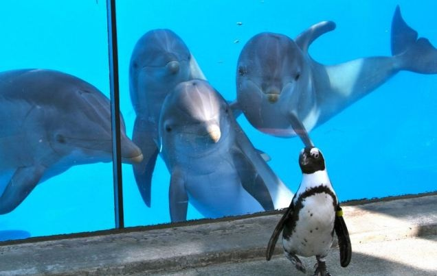 Dolphins, Penguins always cool.Funny Animal Pictures, Animal Kingdom, Funny Pictures, Animal Humor, Dolphins, James Bond, Hilarious Pictures, Penguins, Six Flags