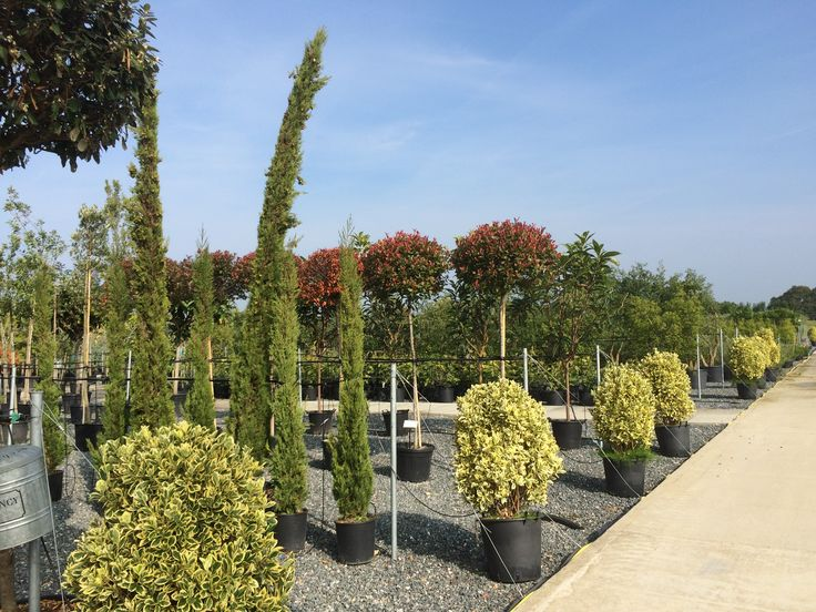The tree lines at our new Pulborough nursery