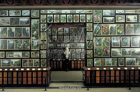 Una de las salas en el pabellón de Kew Gardens donde se muestra la obra de Marianne North.