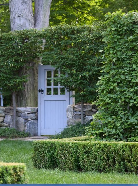 Green hedges and trained to grow in an arch. Doyle Herman Design Associates
