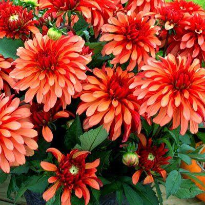 Η ΔΙΑΔΡΟΜΗ ®: Καλοκαιρινή κηπουρική σε γλάστρες!