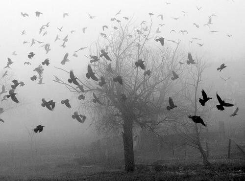 Depressão: doença da vontade