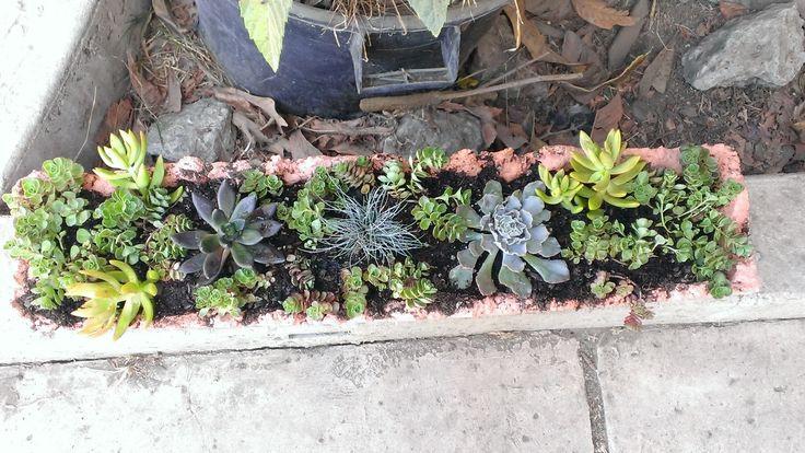 flower pots with succulents