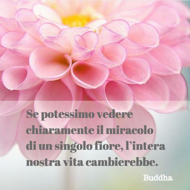 Quote by Buddha #quotes #quote #aforismi #nature #natura #flowers #citazioni #naturequotes #Buddha