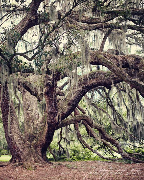 Photographie Savannah en Géorgie chênes par PrettyPetalStudio