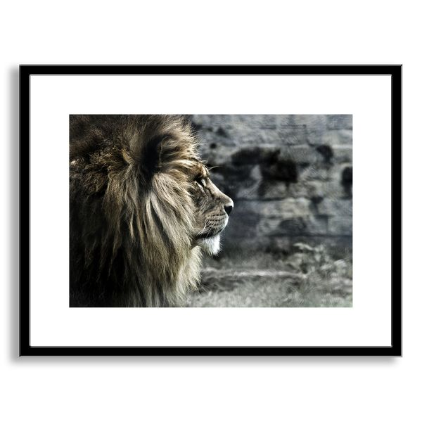 A sleek modern frame makes this a versatile addition to any room in your home or office. The giclee print is framed and matted. Artist: deviantART Title: King of the Lions Product type: Framed paper a