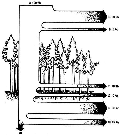 282Водный режим в хвойной тайге: А - осадки, Б - осадки, потребляемые кроной, и потери влаги в виде испарений, В - поверхностный сток, Г - потребление влаги травами, Д - боковое просачивание воды, Е - потребление влаги на уровне корней и деревьев, Ж - сток в грунтовые воды