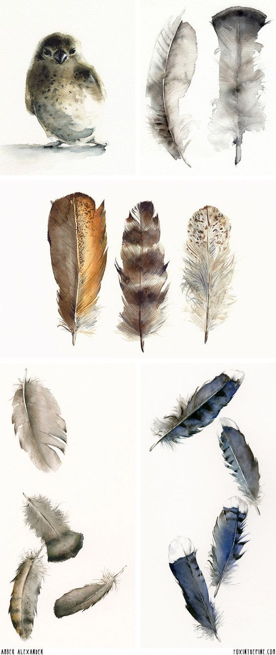 Feathers! Watercolor artwork by Amber Alexander   //   | http://awesomepaiting385.blogspot.com