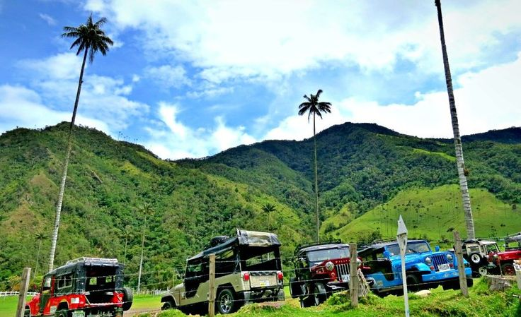 WIllys, aka Jeeps, are the only form of public transit in Salento, Colombia... which means they're the only way to get to the famous Valle de Cocora hike!