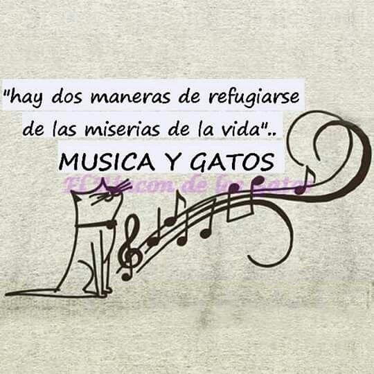 Música y gatos