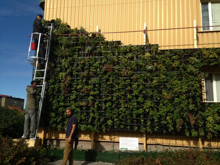 vertikal odling utomhus - Sök på Google