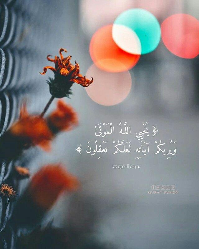 سلام الله و الفاتحة علي أموات المسلمين أجمعين اللهم ارحم جميع أموات المسلمين و أجعل مثواهم الجنة يارب Quran Beliefs Teachings