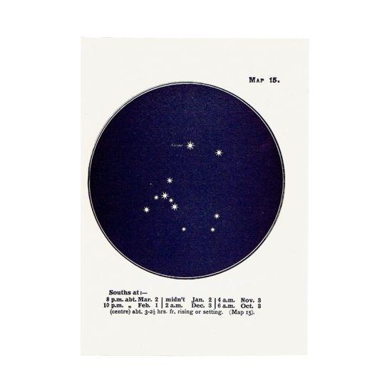 アンティークプリント 天文学・星座 おおいぬ座/シリウス - アンティーク & ヴィンテージの古いプリント・紙もの Comfy design