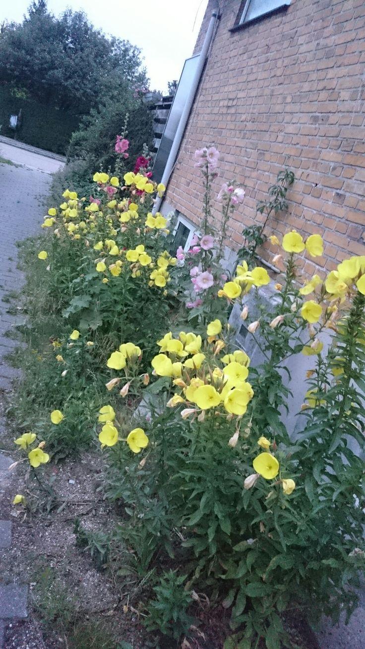 Klokken 8 blomster