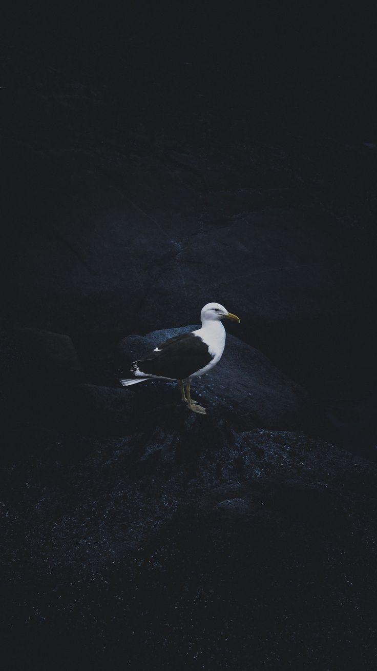 AMOLED Animal Wallpaper # 14   AMOLED Hintergrundbilder   Schwarze Hintergründe   Dark Wallp …