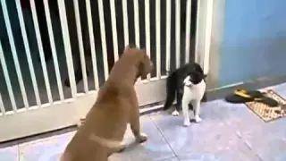 CÃO E GATO BRIGANDO - YouTube