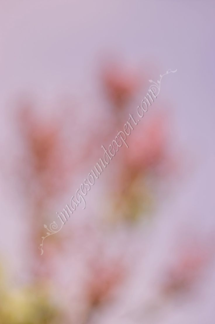 pink lilac spring  background
