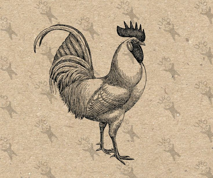 Antique image Cockerel Rooster Instant Download Digital printable vintage picture clipart graphic scrapbooking, burlap, decor etc HQ 300dpi by UnoPrint on Etsy