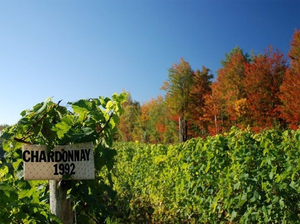 Sur la route des vignobles québécois