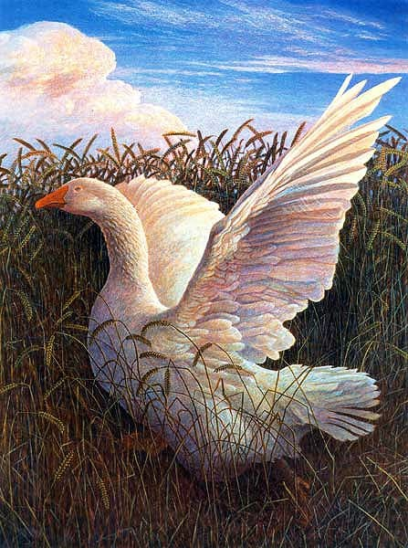 James Lynch - Goose In A Field Of Corn
