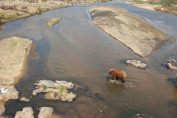 #Elephant crossing the Crocodile River, #Kruger